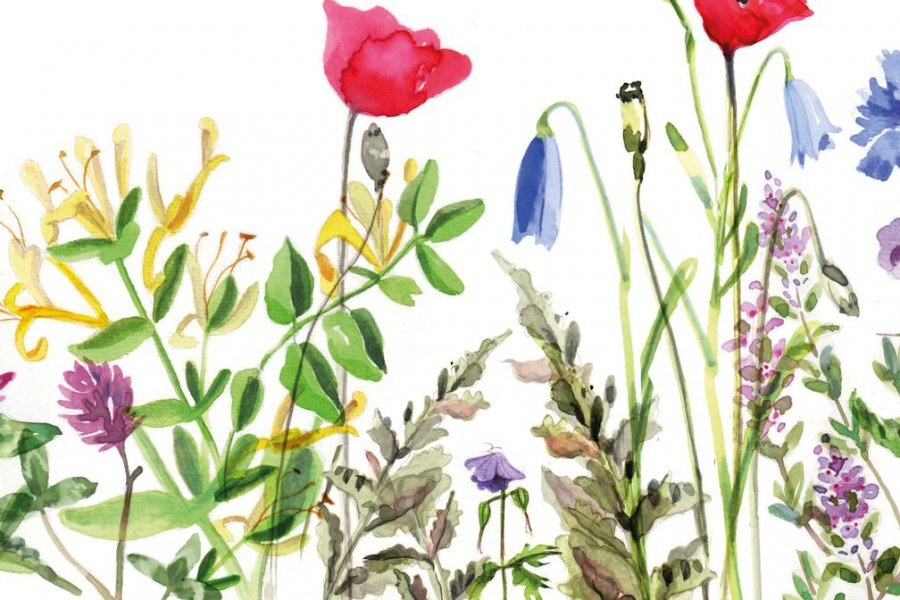 Averting the insect apocalypse
